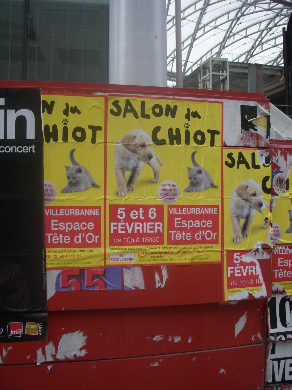 Poutine au gruy re mars 2011 for Salon du chiot lyon