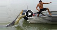 Crocodile locks man's arm in jaws.