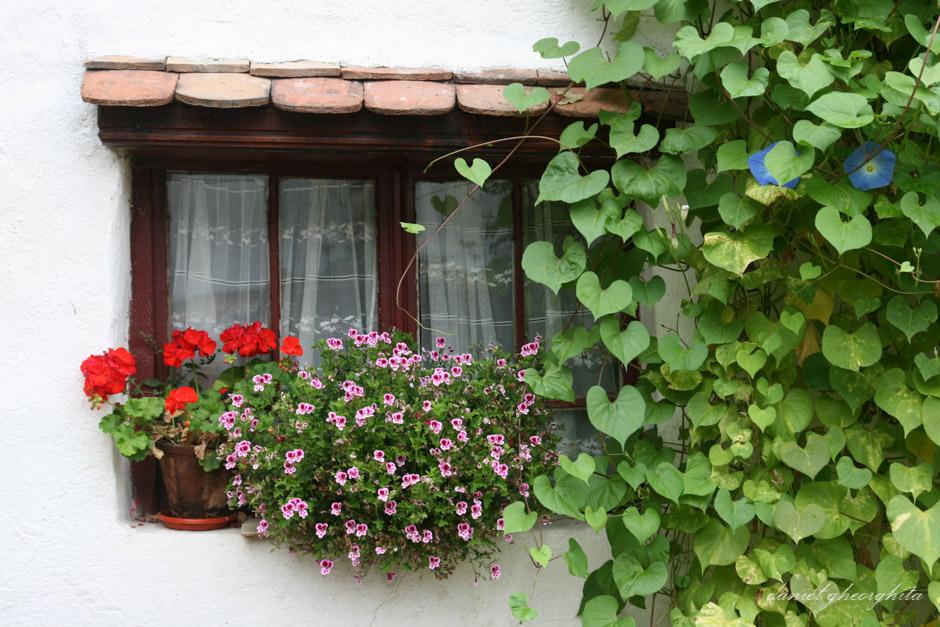 Casa cu Zorele, Crit
