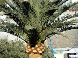 PALMA       lat. Arecaceae