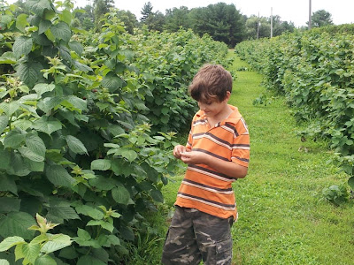 Picking raspberries at Hutchinson Farm, Burlington :: All Pretty Things