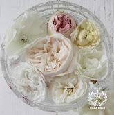 Min rosenhave