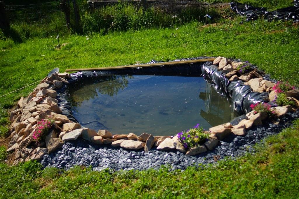 le jardin de nils la cr ation d 39 un bassin. Black Bedroom Furniture Sets. Home Design Ideas