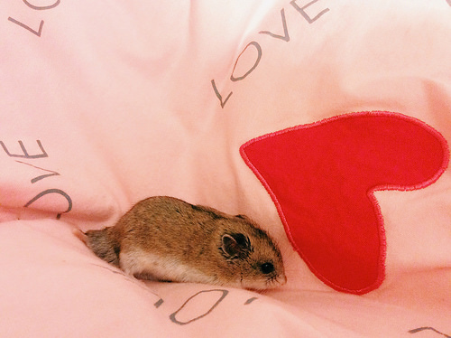 Cute little mice playing in my bed - cutipedia