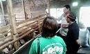 Kunjungan ke Peternakan Domba Merino tgl 29 Maret 2014