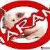 Alasan Mengapa Babi Diharamkan