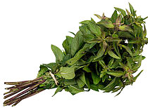Herba pepermin.