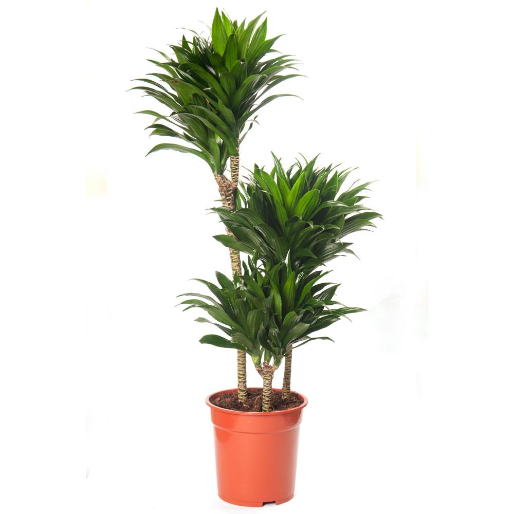 Green - Plantas altas de exterior ...