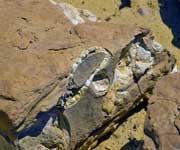 Wadi Al Hitan Whale Valley Egypt