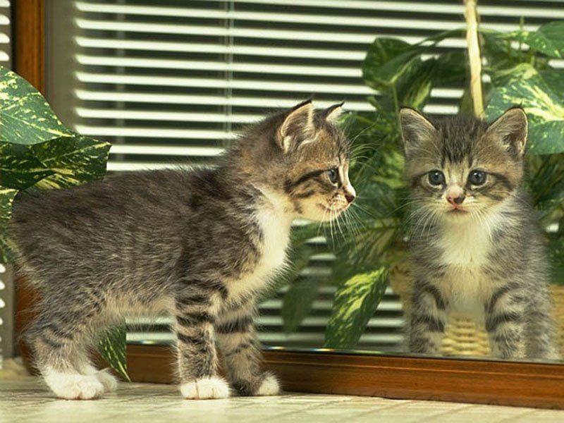 funny kitten wallpaper funny animal