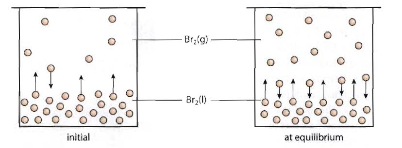nathalie chemistry blog  7 1  dynamic equilibrium