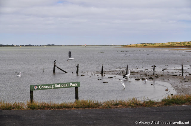 Bird watching at Coorong