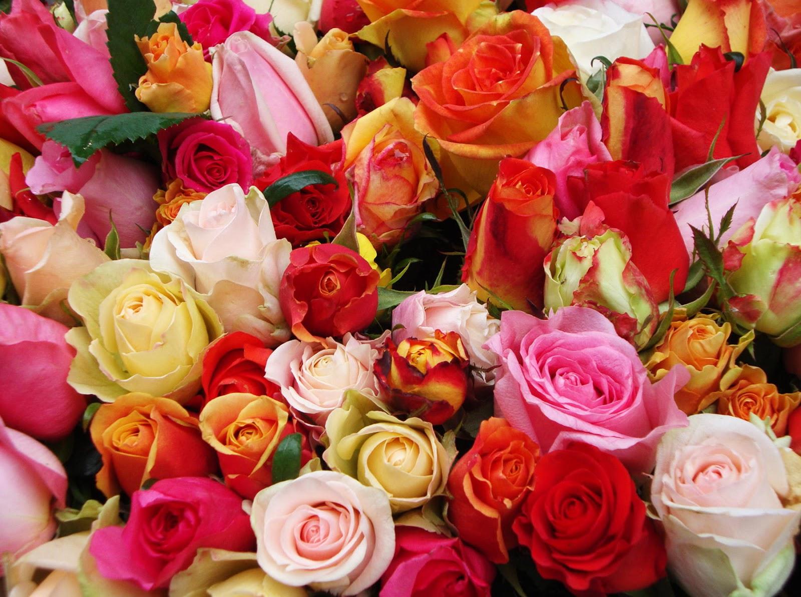 Pin by on flores colores pinterest - Gama de colores rosas ...