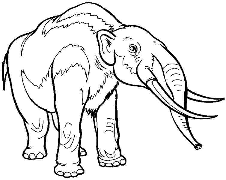Coloring Pages Of Prehistoric Animals : Coloring pages of prehistoric animals woolly mammoth