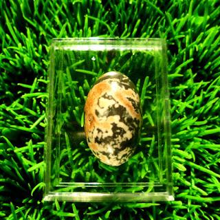 Batu Mustika Khodam Naga Sakti, Jual Mustika Khodam Naga, Azimat Khodam Naga, Kerajaan Keris, Mustika Tanpa Tanding