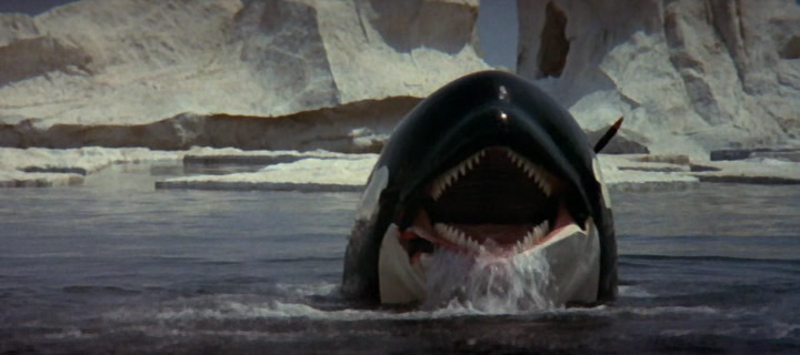 Orca the killer whale movie - photo#13