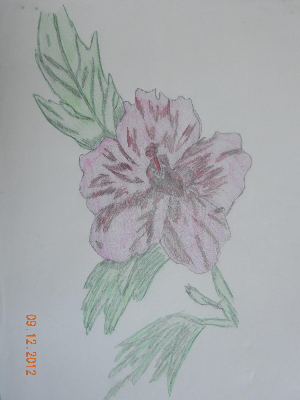 Art Pencil Drawings Flowers