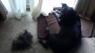 pile of dog hair next to dog