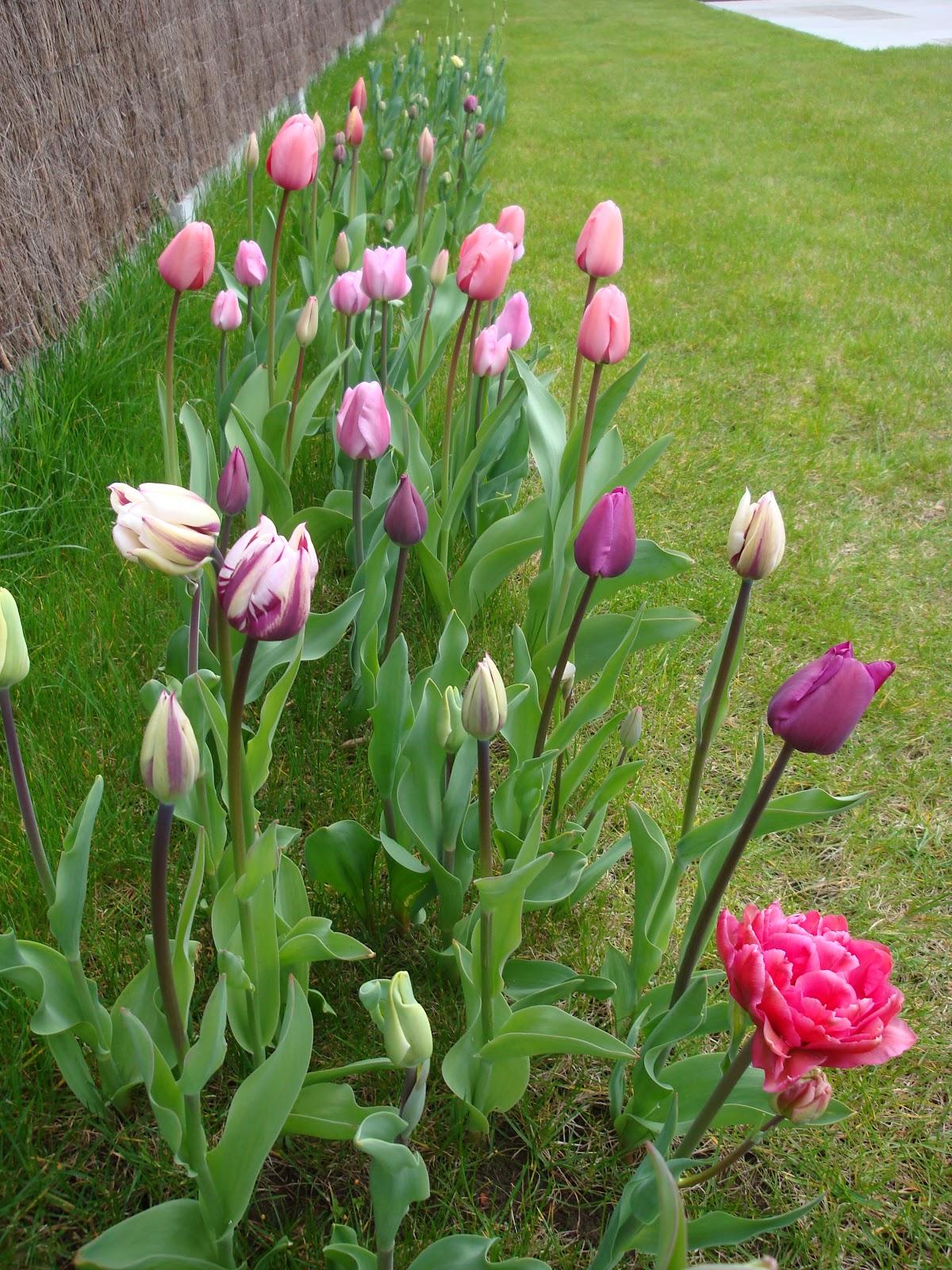 Volg ons allee een beetje toch april 2012 - Geplaveid voor allee tuin ...