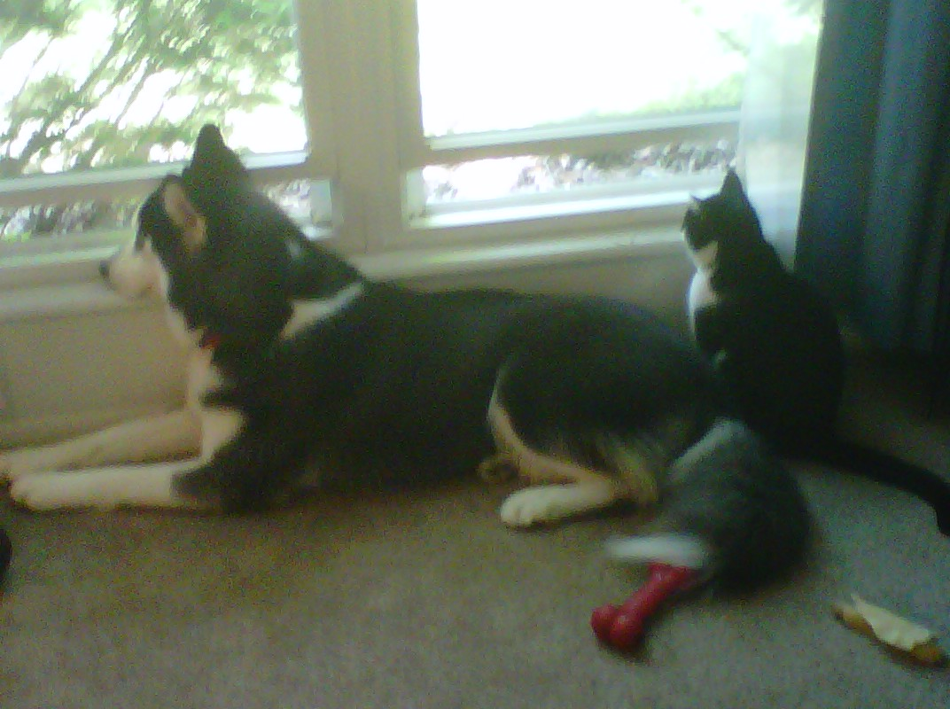Kita and Seph watch out the window.