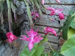 Flor do jardim de casa.