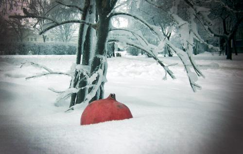 фотография гранат в снегу