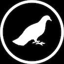 Pigeon Blanco