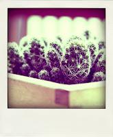 pianta di cactus in vaso di legno