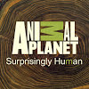 Animal Planet Channel