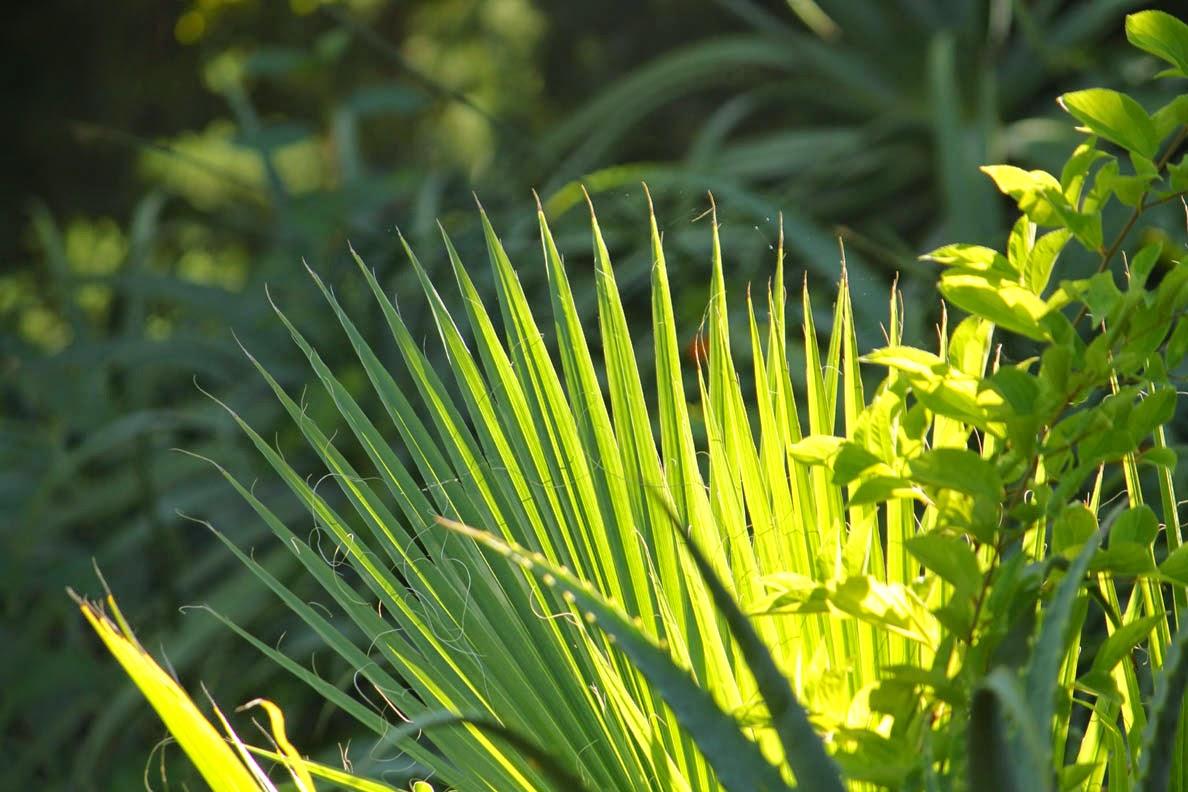 palmunlehdet