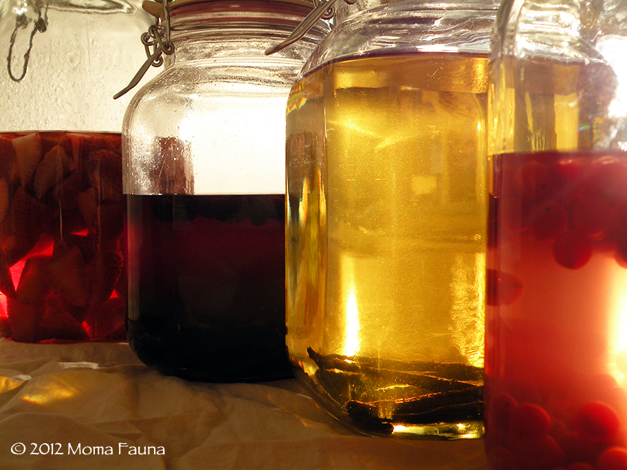 November 2012 Infusions. (left to right: organic strawberry, wild black currant, vanilla bean, wild highbush cranberry)