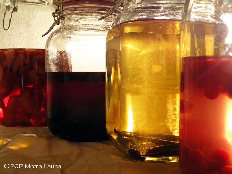 November 2012 Infusions. (left to right: organic strawberry, wild black currant, vanilla bean, wild highbush cranberry)