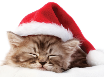 12 Cute Santa Cats That Will Make You Smile Super Meow Meow