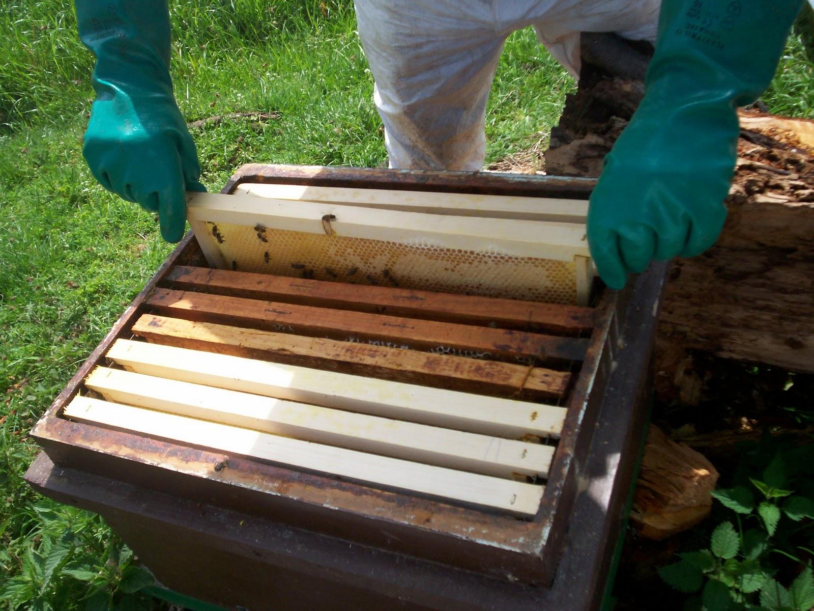 Блог пчеловода для любителей мёда. Пчеловодство для начинающих и не только!: Об изъятии мёда