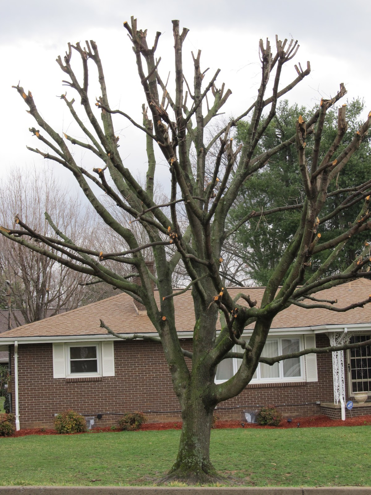 how to take care of weeping mulberry tree