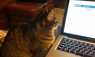 Кошка сидящая у компьютера