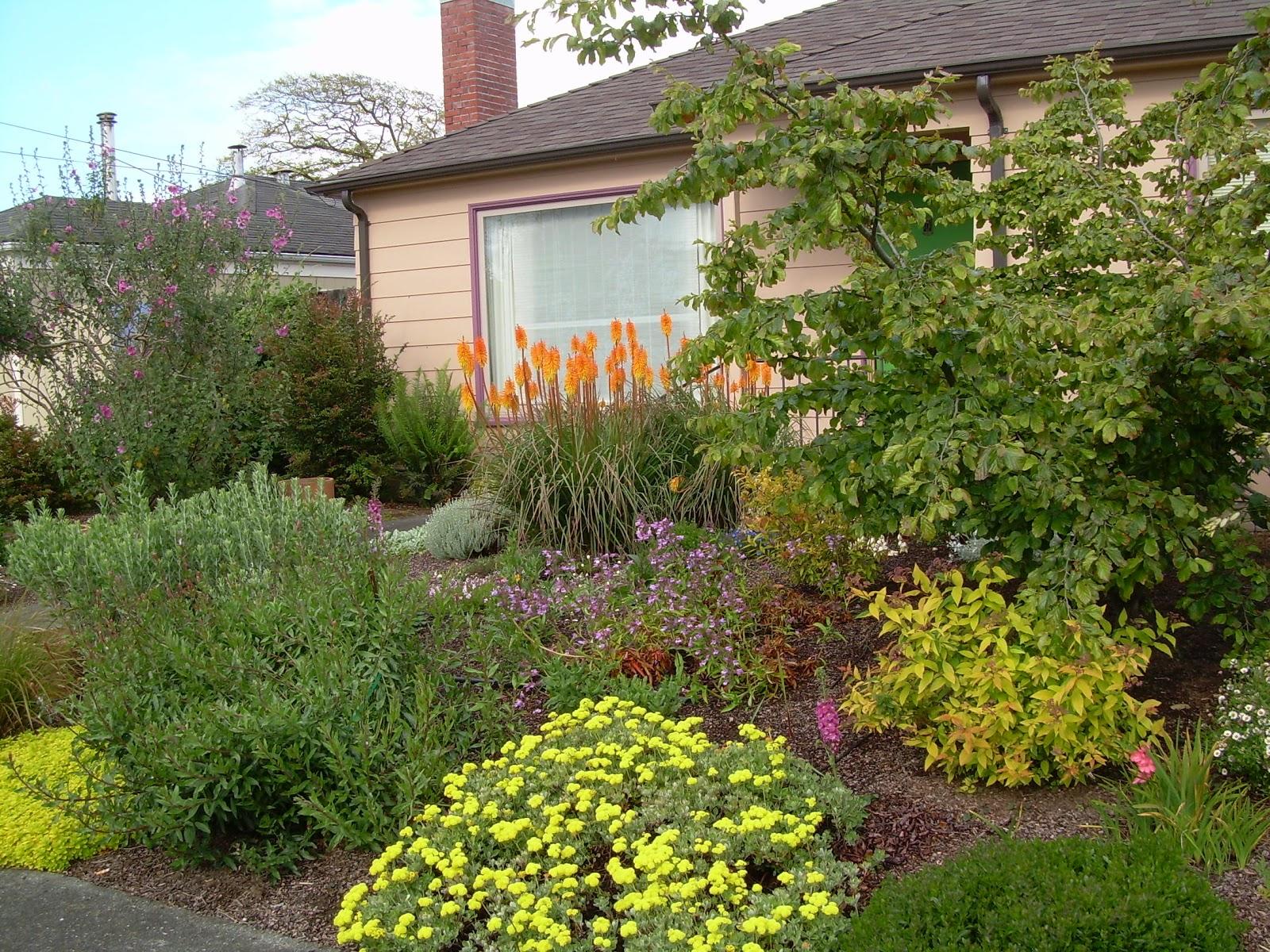 garden visions donna wildearth landscape designer