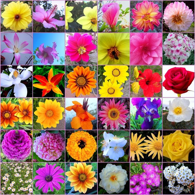 flowers types