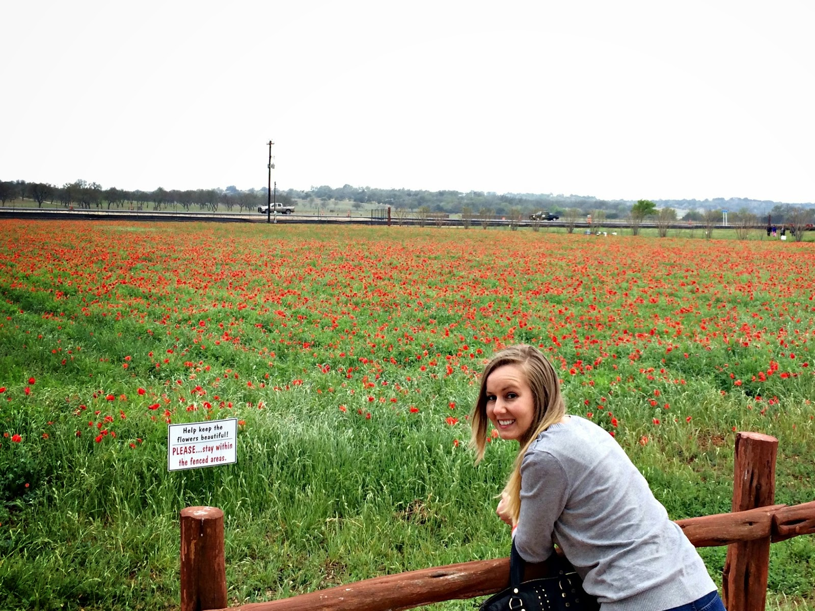 Texas poppies