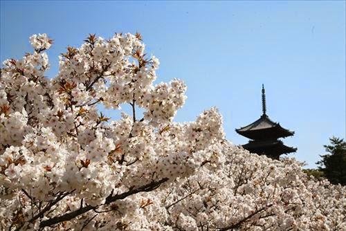 京都市右京区|仁和寺