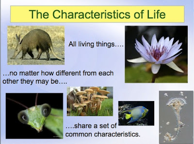 Classroom Freebies: Characteristics of Life PowerPoint
