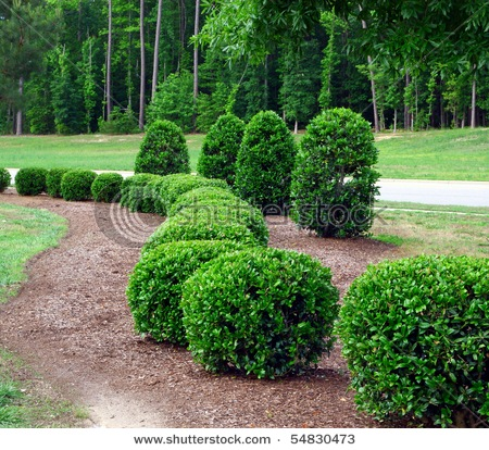 Types Of Bushes