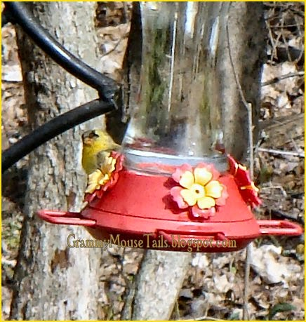 goldfinches drinking hummingbird nectar image) imageanchor=