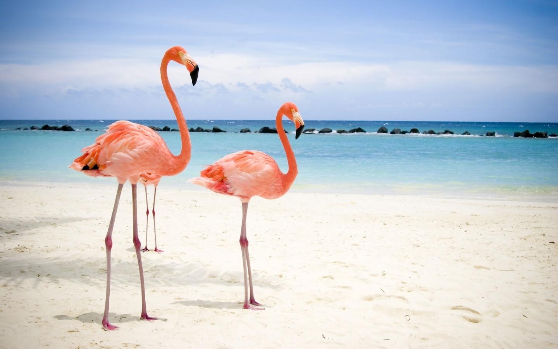 http://1.bp.blogspot.com/-bLy2Ln1PneI/TcipY_Jj74I/AAAAAAAAABk/9SmrOZFRtQE/s1600/pink-flamingos-water-bird.jpg
