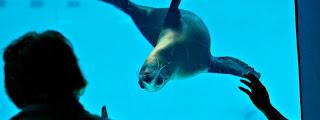 Mystic Aquarium Seal