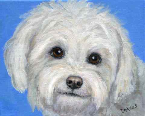 how to draw a realistic bichon frise