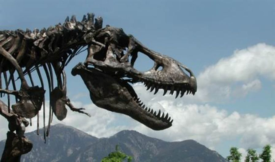 Smithsonian acquires T. rex for new dinosaur hall