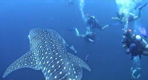 Bubblemakerscuba.com - PADI Go Diving