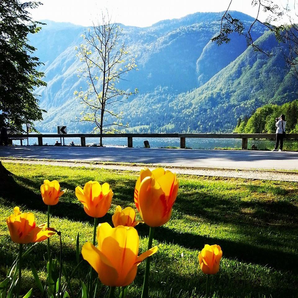 Amarelo na Eslovênia