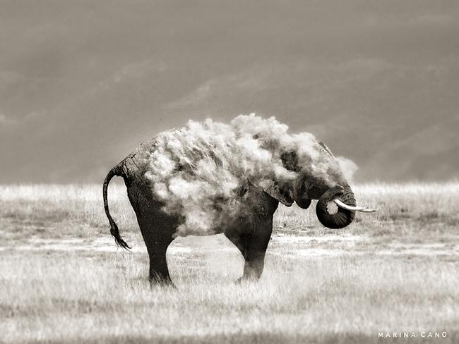 Gajah bermandi debu-debu tanah